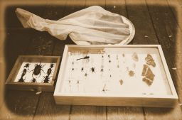 How to Properly Start and Maintain an Insect Collection