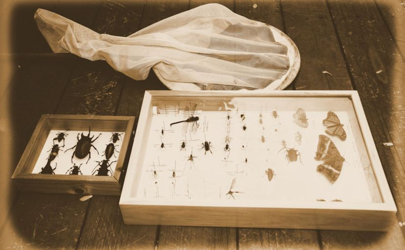 How to Properly Start and Maintain an InsectCollection