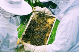 What to Know Before Starting a Beehive Pt.1