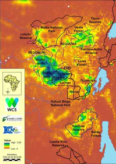 MAP OF PROBABILITY OF GRAUER'S GORILLA OCCURRENCE IN EASTERN DEMOCRATIC REPUBLIC OF CONGO (WITH GREEN INDICATING HIGHER OCCURRENCE). CREDIT: COURTESY OF WCS.